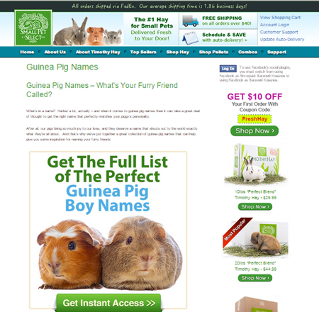 Guinea Pig Names – What's Your Furry Friend Called?