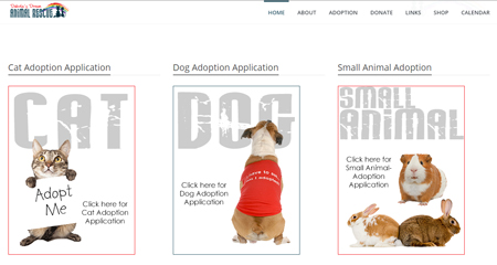 Small Animal Adoption