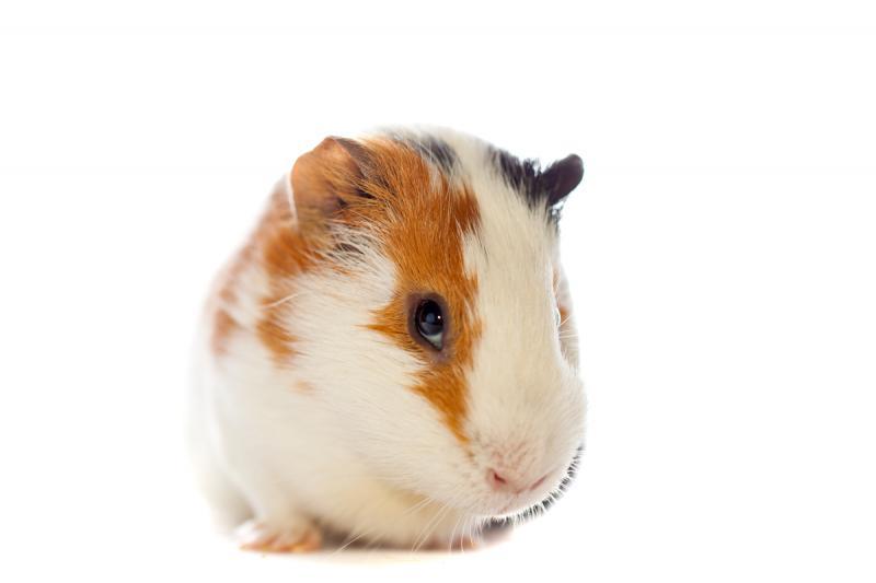 pet-picture
